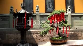 1--28032-Lantern & Bonsai Tree